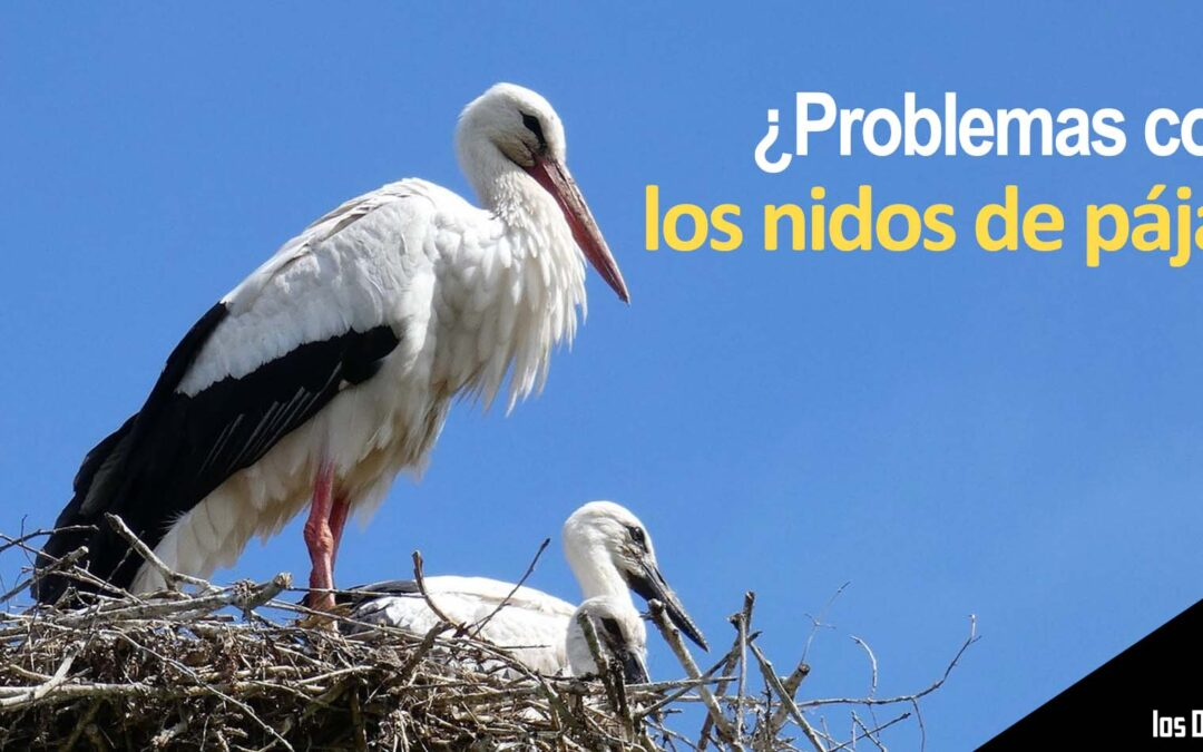Los problemas más comunes en chimeneas con nidos de pájaros