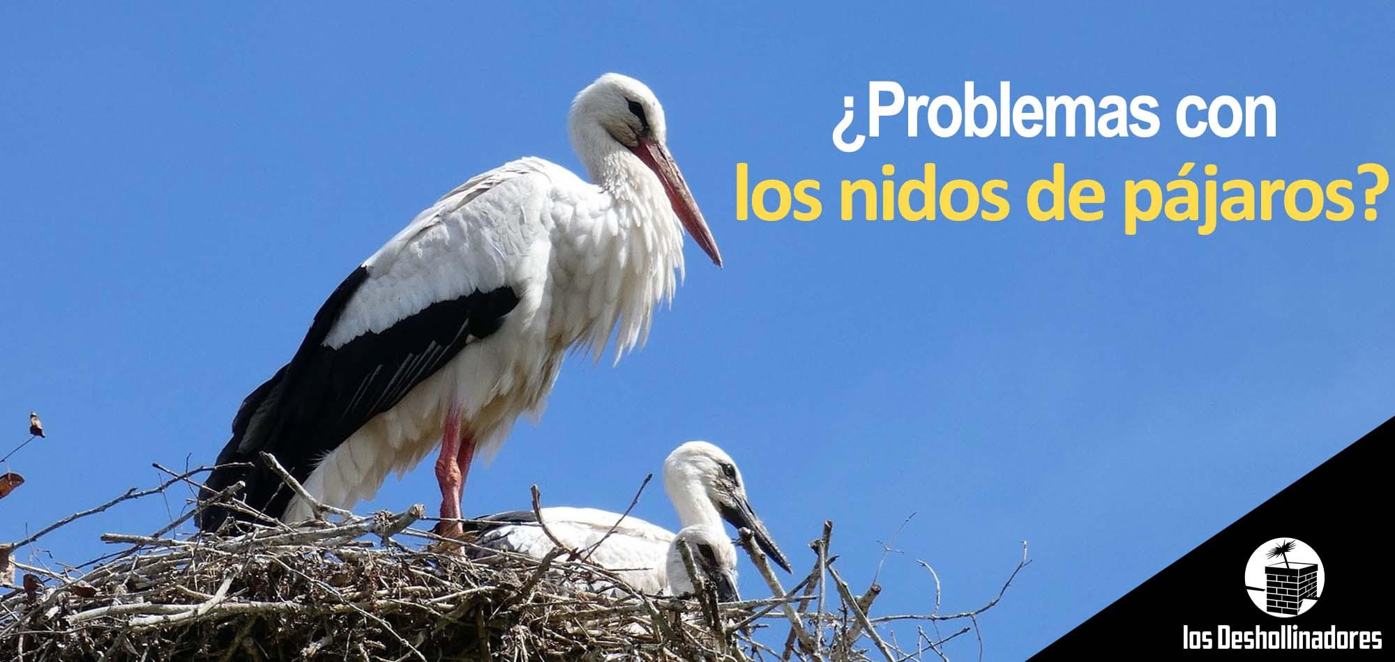 problemas-nidos-pajaros
